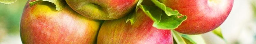 Appelboom kopen, appelboom