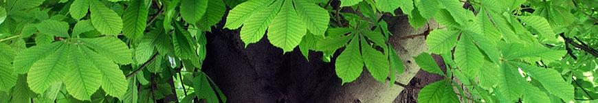 Bomen kopen, bomen online