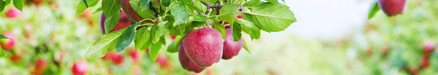 Fruitbomen, fruitbomen kopen