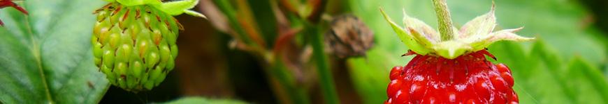 Kruidenplanten, kruidenplant kopen