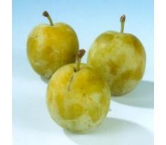prunus domestica dubbele boerenwitte pruimenboom