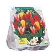 Tulipa Greiggi mix