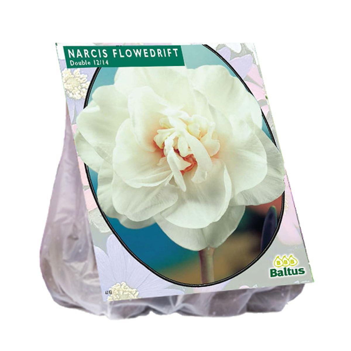Narcis Flower Drift