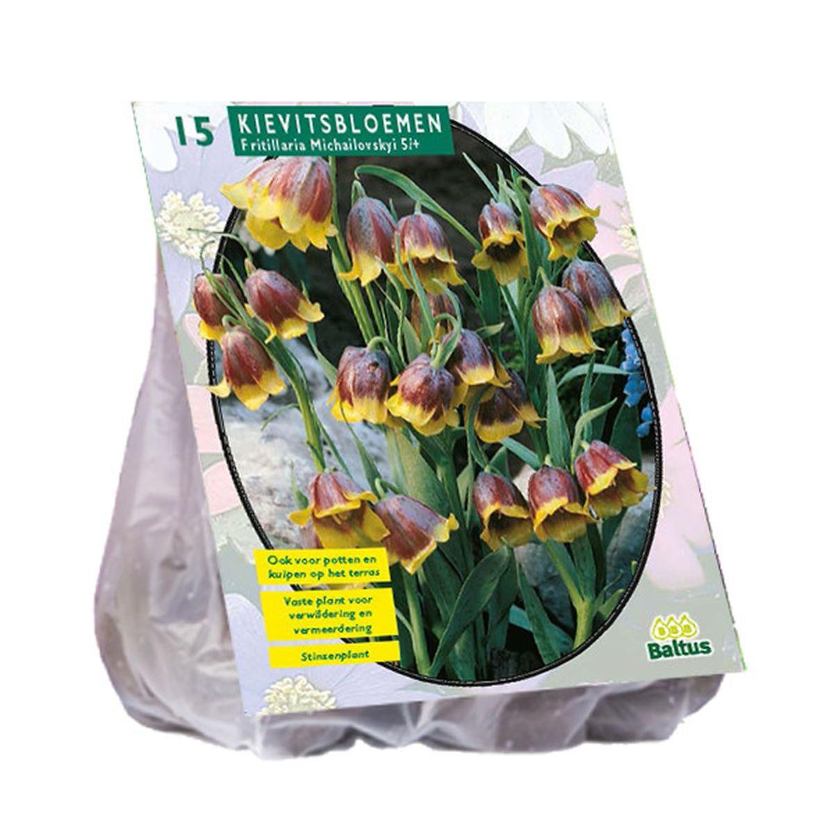 Fritillaria Michailovski
