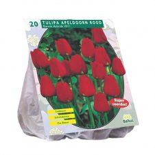 Tulp Apeldoorn - rood