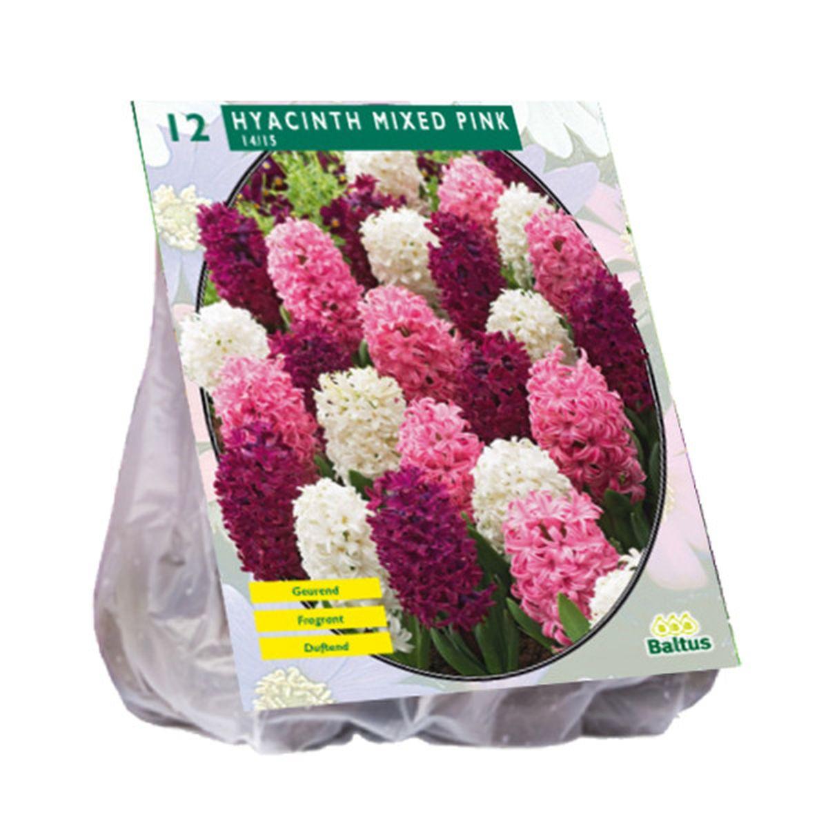 Hyacint Mixed Pink