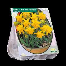 Narcis Mini Rip van Winkle