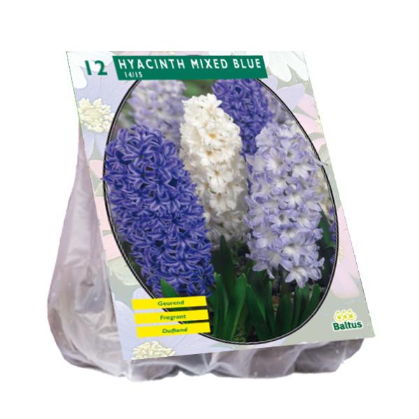 Hyacint Mixed Blue