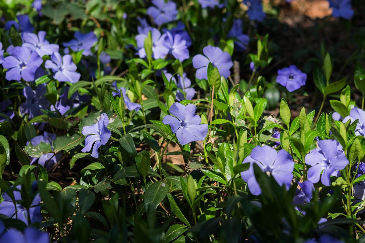 vaste planten zon