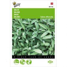 Buzzy Salie kruidenplant