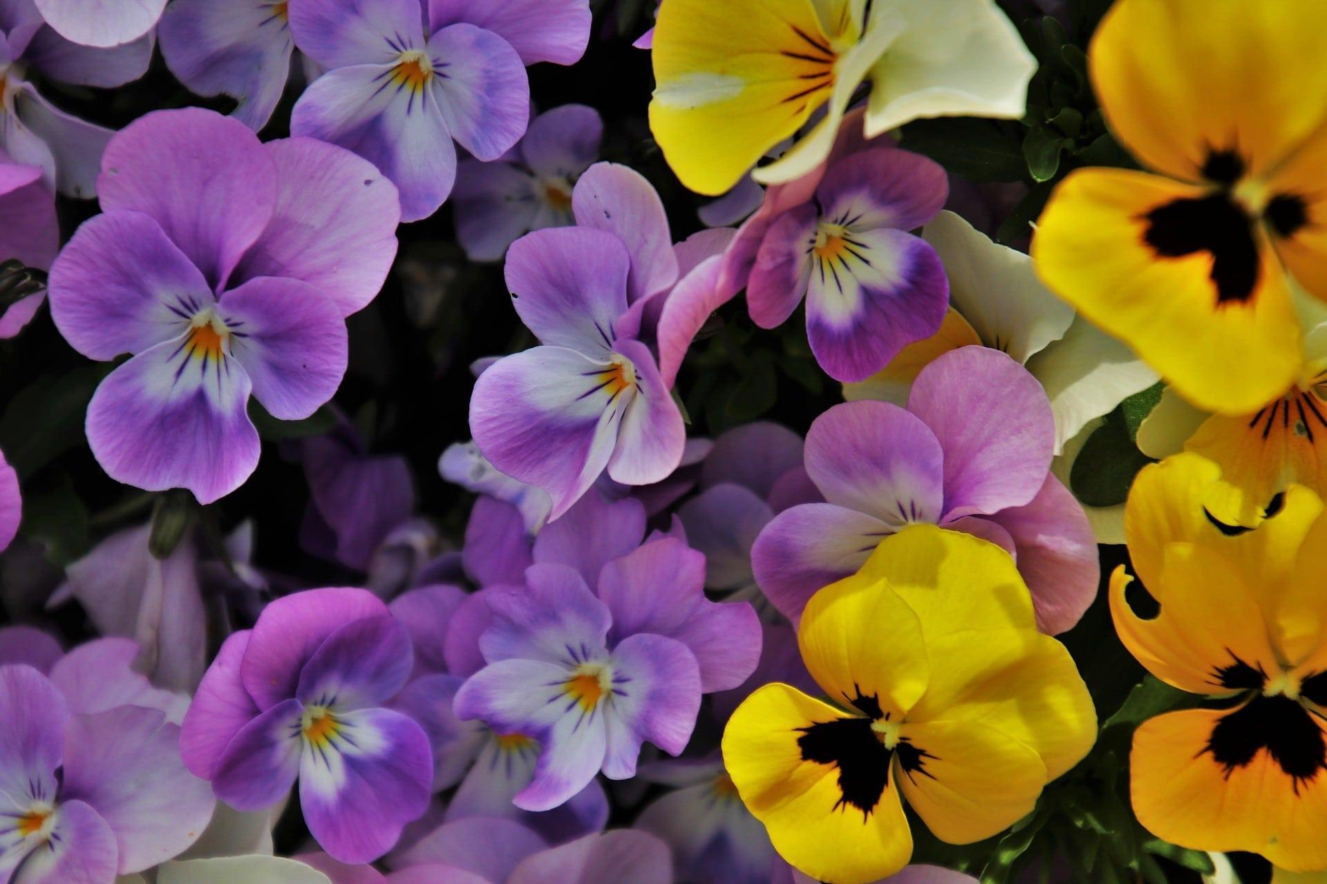 Voorjaars bloeiers